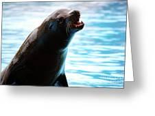 Sea-lion Greeting Card by Carlos Caetano