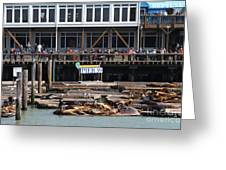 Sea Lions At Pier 39 San Francisco California . 7d14272 Greeting Card by Wingsdomain Art and Photography