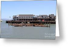Sea Lions At Pier 39 San Francisco California . 7d14273 Greeting Card by Wingsdomain Art and Photography