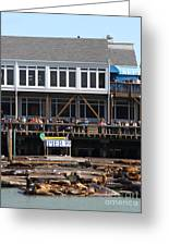 Sea Lions At Pier 39 San Francisco California . 7d14274 Greeting Card by Wingsdomain Art and Photography