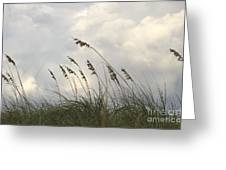 Sea Oats Greeting Card by Blink Images