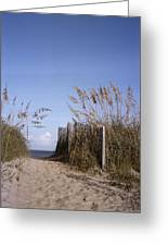 Sea Oats Line The Path Greeting Card by Taylor S. Kennedy