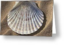 Sea Shell 2 Greeting Card by Mike McGlothlen