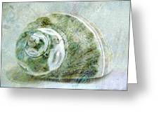 Sea Shell I Greeting Card by Ann Powell