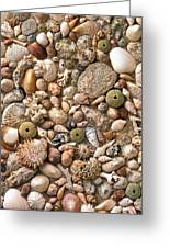 Sea Shells Greeting Card by Mauro Celotti