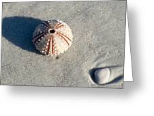 Sea Urchin And Shell Greeting Card by Kenneth Albin