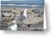 Seagull Bird Art Prints Coastal Beach Bandon Greeting Card by Baslee Troutman