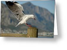 Seagull Landing On Pole Greeting Card by Sami Sarkis