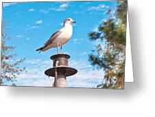 Seagull Greeting Card by Tom Gowanlock