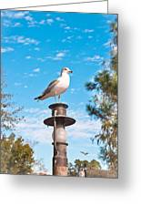 Seagull Greeting Card by Tom Gowanlock