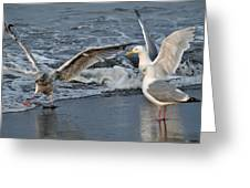 Seagull Treasures Greeting Card by Debra  Miller
