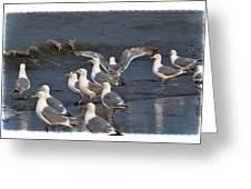 Seagulls Gathering Greeting Card by Debra  Miller
