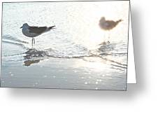 Seagulls In A Shimmer Greeting Card by Olivia Novak