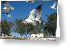 Seagulls On Anna Maria Island Greeting Card by Leontine Vandermeer