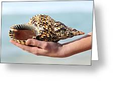 Seashell in hand Greeting Card by Elena Elisseeva