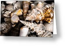 Seashells Greeting Card by Hakon Soreide