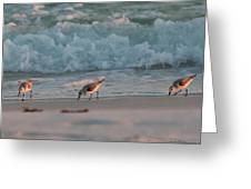 Seaside Trio Greeting Card by Charles Warren