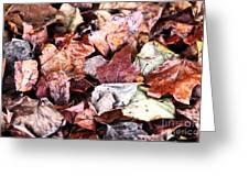 Seasons Change Greeting Card by John Rizzuto