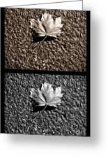 Seasons Of Change Greeting Card by Luke Moore
