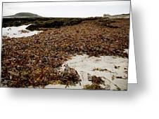 Seaweed Covered Beach Greeting Card by Dr Keith Wheeler