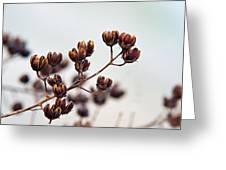 Seed Pods 1 Greeting Card by Douglas Barnett