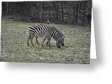 Seeing Double Greeting Card by Tammy Price