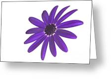 Senetti Deep Blue Head Greeting Card by Richard Thomas