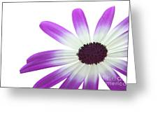 Senetti Magenta Bi-color Lower Right Greeting Card by Richard Thomas