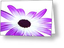 Senetti Magenta Bi-colour Greeting Card by Richard Thomas