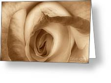 Sepia Petals Greeting Card by Cheryl Young