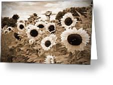 Sepia Sunflower Field Greeting Card by Debbra Obertanec