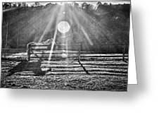 Shadow Greeting Card by Darrin Doss