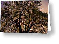 Shady Tree ... Greeting Card by Juergen Weiss