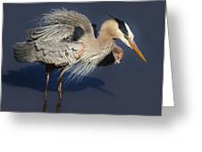 Shaking Out My Tail Feathers Greeting Card by Paulette Thomas