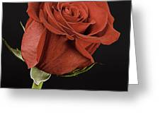 Sharp Red Rose On Black Greeting Card by M K  Miller