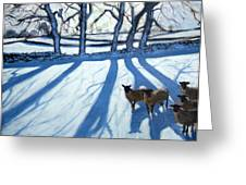 Sheep In Snow Greeting Card by Andrew Macara