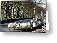 Sheep On The Road, Torr Head, Co Greeting Card by The Irish Image Collection