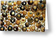 Shell Background Greeting Card by Carlos Caetano