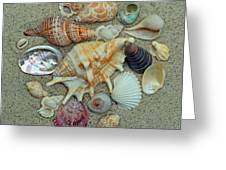 Shell Collection 2 Greeting Card by Sandi OReilly