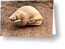 Shell Greeting Card by Tom Gowanlock