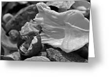 Shells Vi Greeting Card by David Rucker
