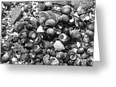 Shells Vii Greeting Card by David Rucker