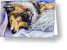 Sheltie Napster Greeting Card by Lyn Cook