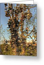 Shoe Tree Greeting Card by Lori Kimbel