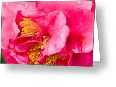 Shy Camellia Greeting Card by Rich Franco