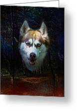 Siberian Husky Greeting Card by Brian Roscorla