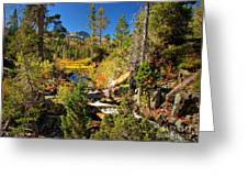 Sierra Nevada Fall Beauty at Lily Lake Greeting Card by Scott McGuire