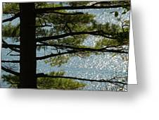 Silhouette Of A Tree With Connecticut Greeting Card by Todd Gipstein