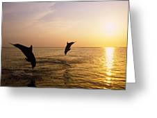 Silhouette Of Bottlenose Dolphins Greeting Card by Natural Selection Craig Tuttle