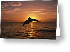 Silhouette Of Leaping Bottlenose Greeting Card by Natural Selection Craig Tuttle
